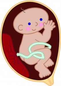 BB在子宮內怎樣學習?