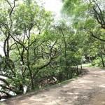 周末好去處 : 菠蘿霸自然教育徑, 沿途景色