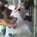 周末好去處 : 錦田鄉村俱樂部, 餵餵小動物