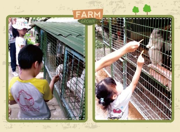 周末好去處:上水假日農莊,有得餵小動物呀