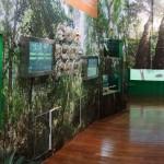 周末好去處 : 大潭水塘 - 樹木研習徑