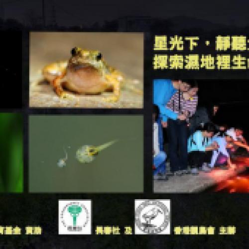 夜探塱原濕地‧睇螢火蟲、小姬蛙
