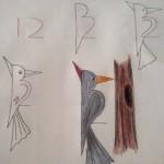 幼兒數字作畫,擴思考空間, 12變成啄木鳥