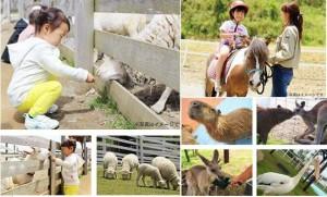 日本神奈川県好玩「山頭」公園, 仲可以餵下動物仔