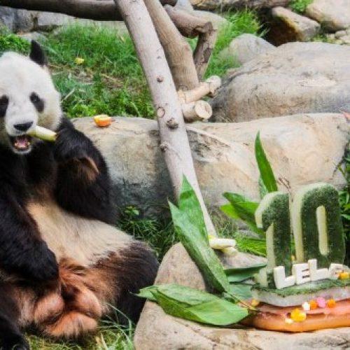 海洋公園推港人優惠 名字與熊貓有關有75折