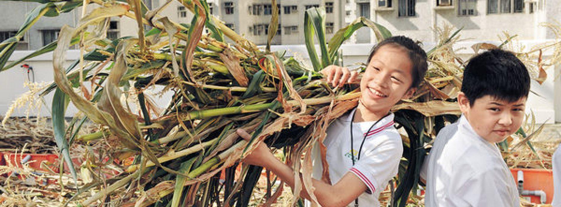 小學天台園圃 耕種領悟育兒法