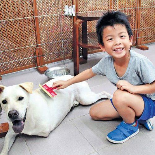 6歲童寫書籌款 助養唐狗建責任